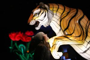 Wild Lights at Dublin Zoo. See the Zoo in a New Light!